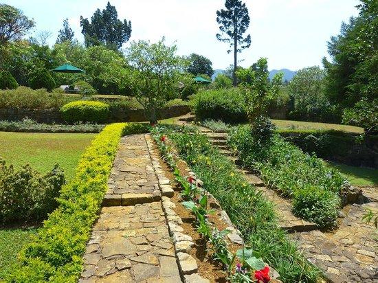 Ceylon Tea Trails: Gardens