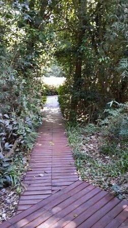 Cabanas Luces de la Selva: senderos a la pileta