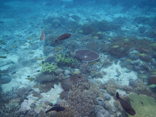 Bali Jet Set Dive and Marine Sports : the corals & fishes