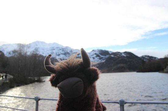 The Hairy Coo - Free Scottish Highlands Tour : Baby Hamich and a Loch