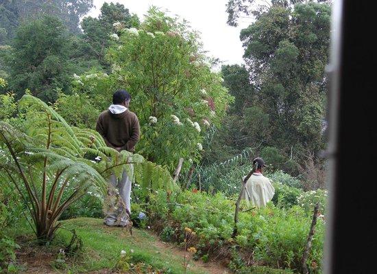 King Fern Bungalow: Wasantha in his garden
