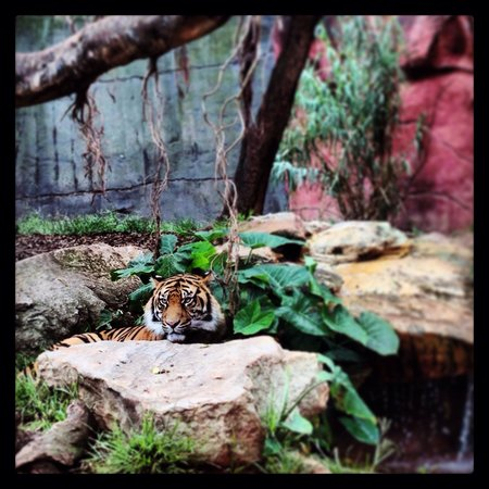 Taronga Zoo: Beautiful