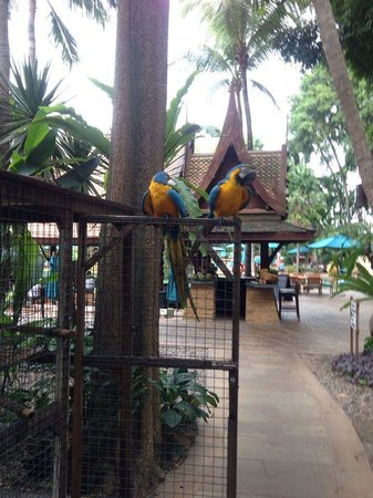 Pattaya Marriott Resort & Spa: The resident parrots- Peter & Pan