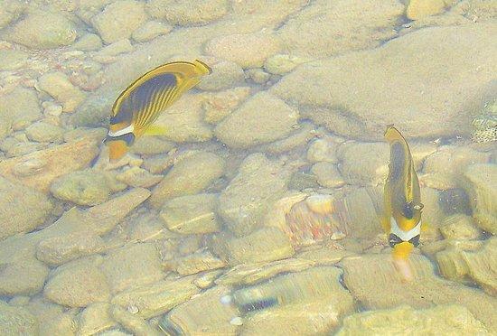 Domina Coral Bay Aquamarine Hotel: рыбки у отеля