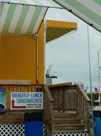 Key Largo Fisheries Backyard: Backyard Cafe at the Pilot House Marina