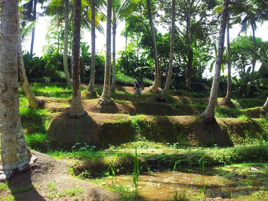 KajaNe Mua Private Villa & Mansion: rice fields at the end of Kajane Mua
