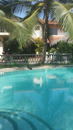 Asian Jewel Boutique Hotel: Pool with cat drinking