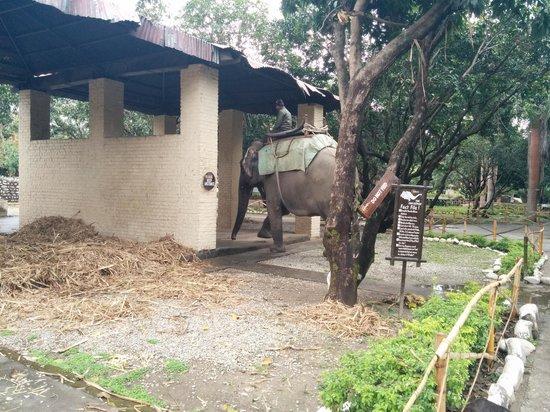 Infinity Resorts: Elephant at Resort
