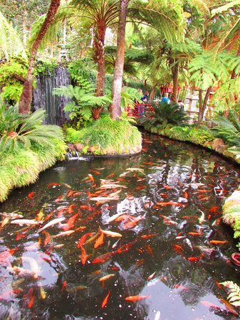 Monte Palace Tropical Garden : well stocked carp ponds