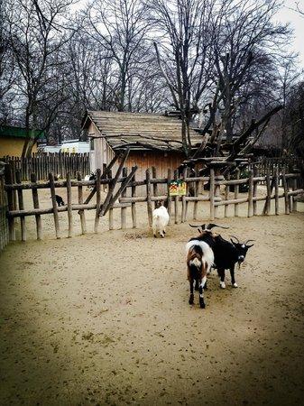 Tiergarten Schoenbrunn - Zoo Vienna : Потрясающие игривые козлята, один уже на дереве
