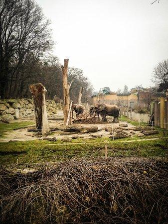 Tiergarten Schoenbrunn - Zoo Vienna : Слоны, очень хороший обзор! Наблюдали, как маленький слоненок донимал большого, пока тот не сбеж