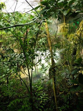 Tiergarten Schoenbrunn - Zoo Vienna : В тропическом павильоне гремит гром