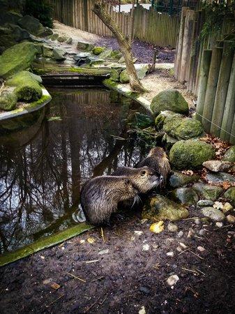Tiergarten Schoenbrunn - Zoo Vienna : Весёлая кампания