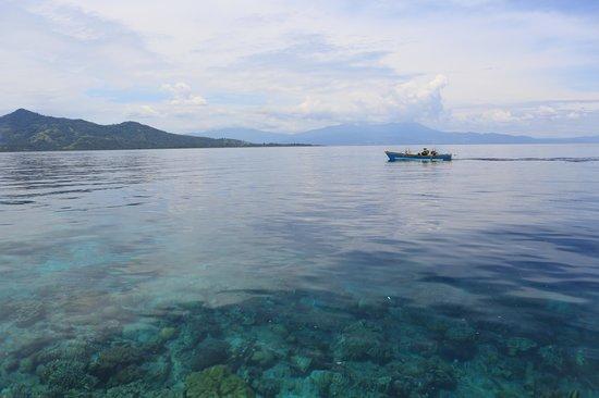 Odyssea Divers: MANADO