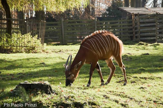 Krakow Zoo (Ogrod Zoologiczny) : A antelope in a very big cage