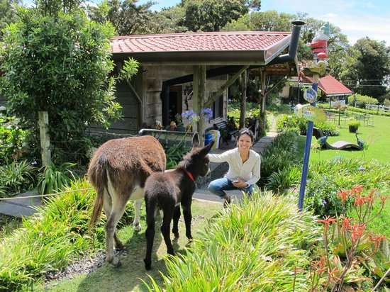 Altura Hotel: Love the animals