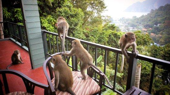 Phi Phi Arboreal Resort : гости из джунглей)