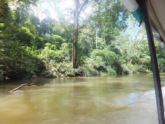 Gavilan Sarapiqui River Lodge: River boat tour