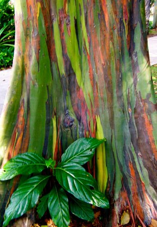 """Honolulu Zoo: This Gum tree was right out of """"Avatar""""!"""