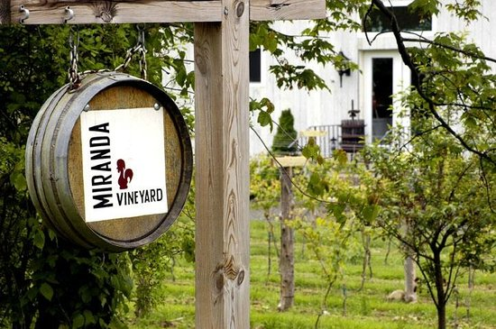 Goshen, CT: Miranda Vineyard