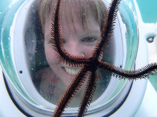Aqua Adventure : Brittle Star Smile