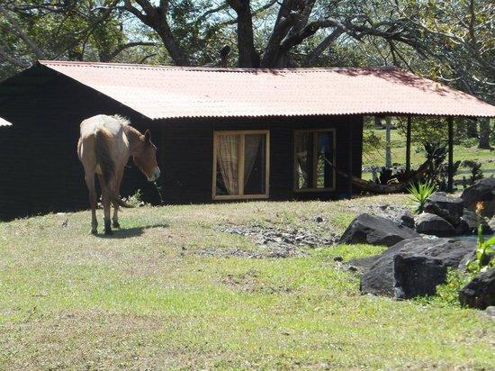 Rincon de la Vieja Lodge: separate roomy cabins