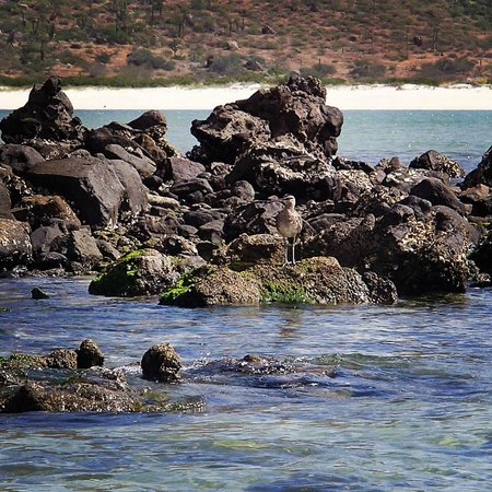 Balandra Beach : if you walk towards the back of the beach you can see nature at its best