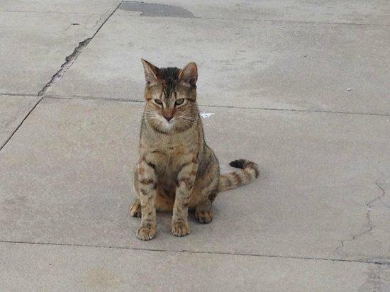 Melia Nassau Beach - All Inclusive: Such a cuty kitty