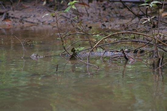 Evergreen Lodge: And a caiman or two!