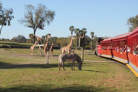 Jardines Busch: passeio de trem