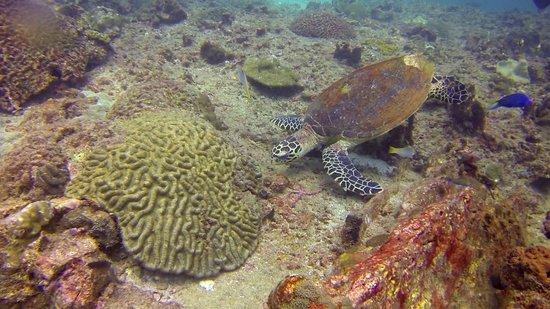 Ocean Geo Diving & Tours: Turtle