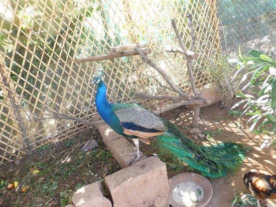 Le Paradis du Safran : elles sont pas belles mes plumes !!!