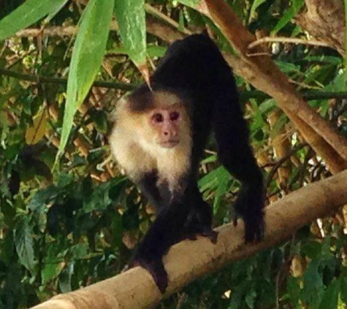 Monkeys at La Parcela