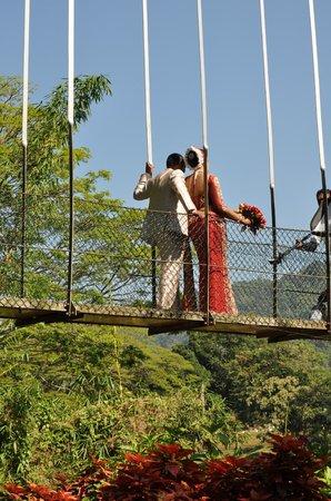 Royal Botanical Gardens: mariés sur le pont suspendu