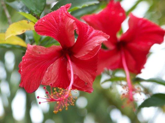 Sarita Colonia Medicinal Garden : Flowers