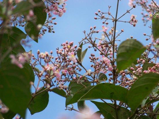 Sarita Colonia Medicinal Garden : Ayahuasca
