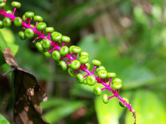 Sarita Colonia Medicinal Garden : Plant