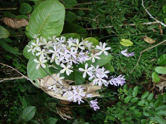 Sarita Colonia Medicinal Garden : Flower