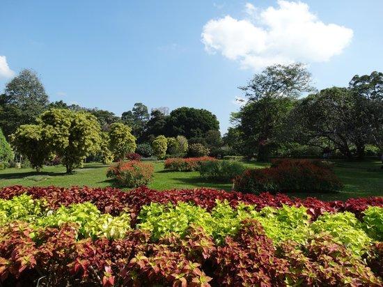 Royal Botanical Gardens: parc