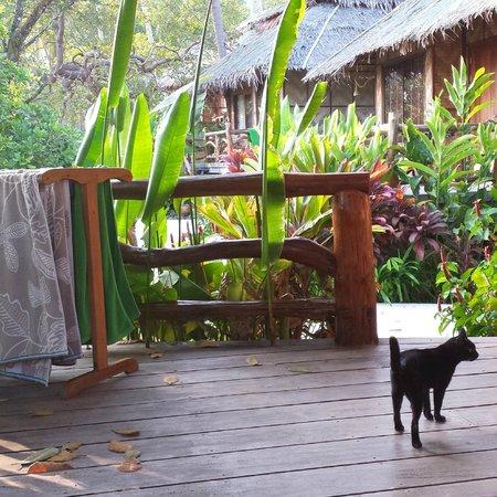 Betterview Bed Breakfast & Bungalow: Sweet cat