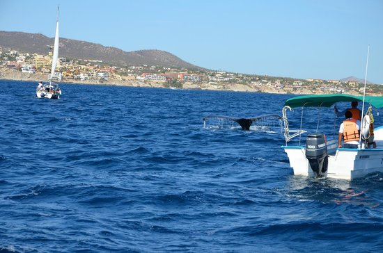 Cabo Sails: A tail!