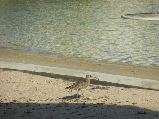 Sheraton Grand Doha Resort & Convention Hotel: another birds on hotel grounds