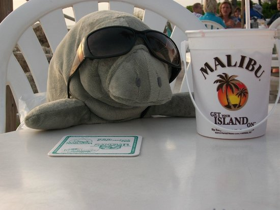 Beach House Restaurant: Manatee from the gift shop