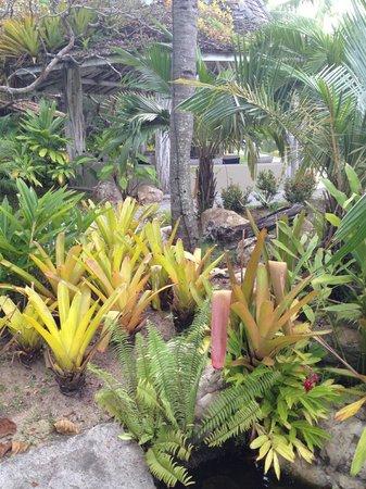 Arraial D'Ajuda Eco Resort : natureza bela