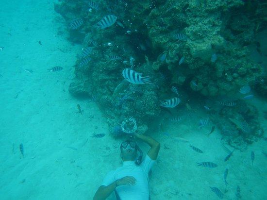 Arrecife del descubrimiento: Bolhas Perfeitas