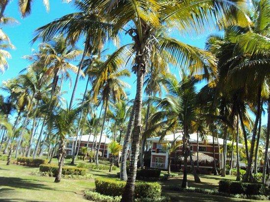 Grand Palladium Punta Cana Resort & Spa: alrededores dentro del hotel