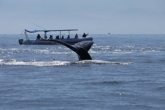 Whale Watching Photo Safari by Vallarta Adventures: Not taken with a telephoto lens The Rib is no more than 20m away