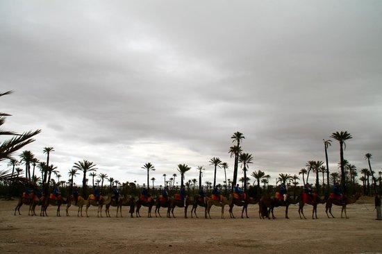 Riad Hannah City Hotel : Camel riding Palmeraie