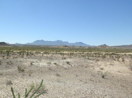 Chihuahuan Desert: Desert near Persimmon Gap Visitor Center