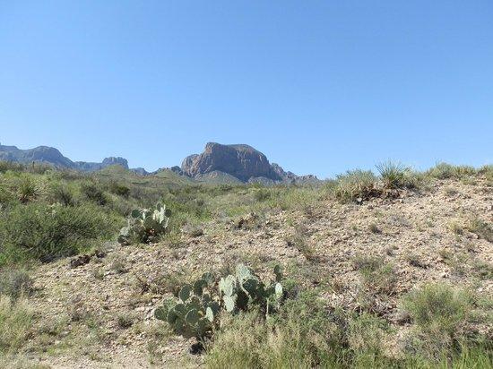 Chihuahuan Desert: desert near Panther Junction Visitor Center